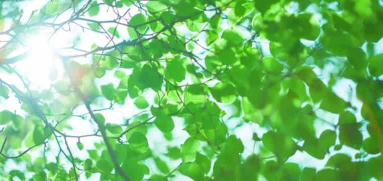 群馬県は日本有数の晴天に恵まれる立地です